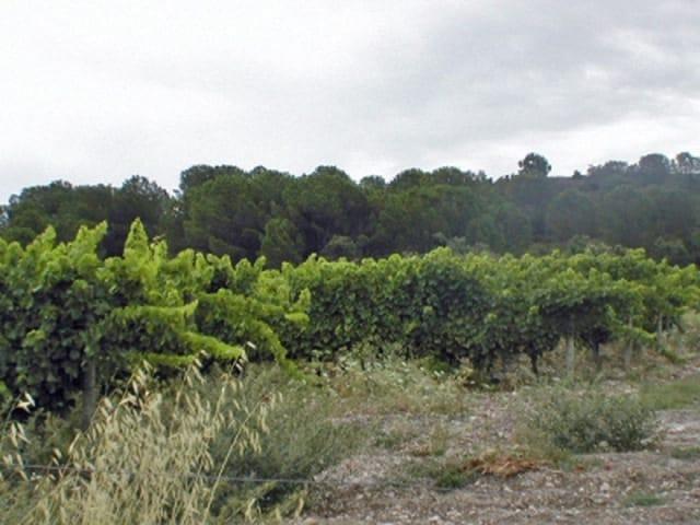 Frankrijk agrarisch domein te koop languedoc aude moulin for Agrarisch bedrijf te koop gelderland