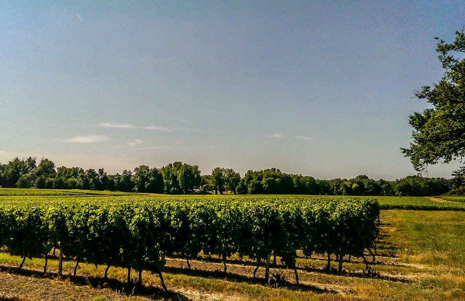 Bordeaux Rode Slaapkamer : Vineyard ha for sale blaye cotes de bordeaux very nice