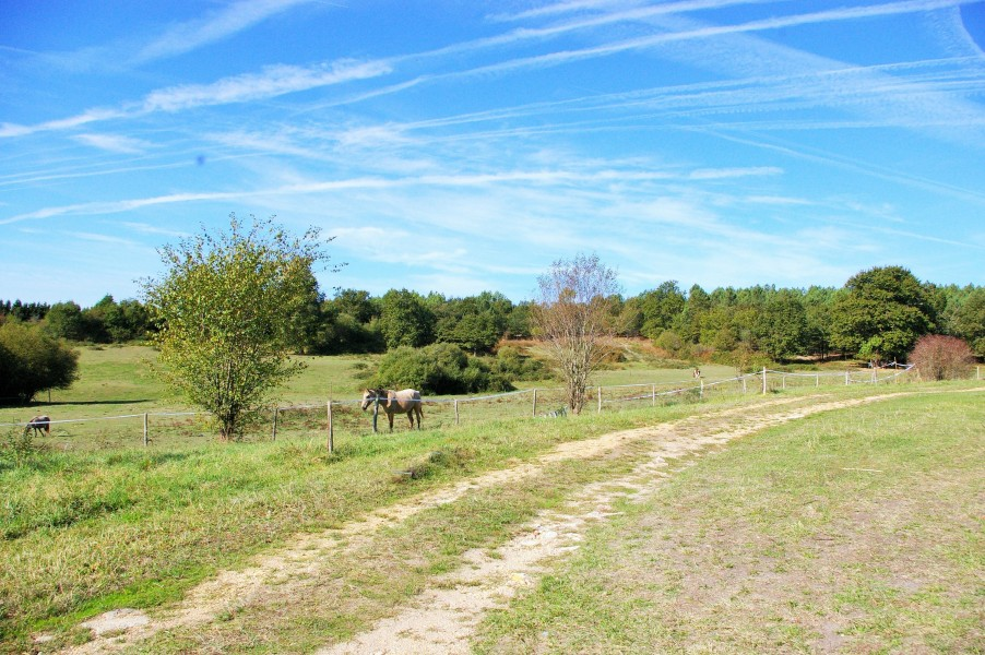 Equestrian Property With Stables For Sale On 30 Ha Charente Maritime, France    Moulin