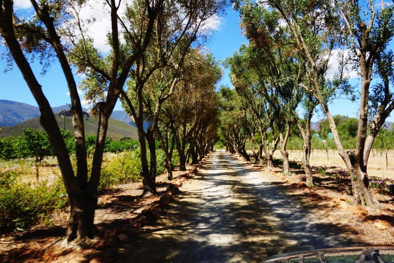 Farm land with olive trees and gardens | Moulin